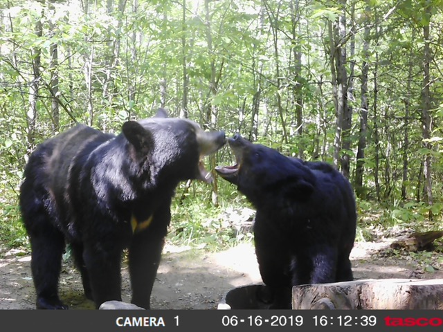 July 2019 | Desiree and Mike Motiff | That's my doughnut!! | Great trail cam pic!!