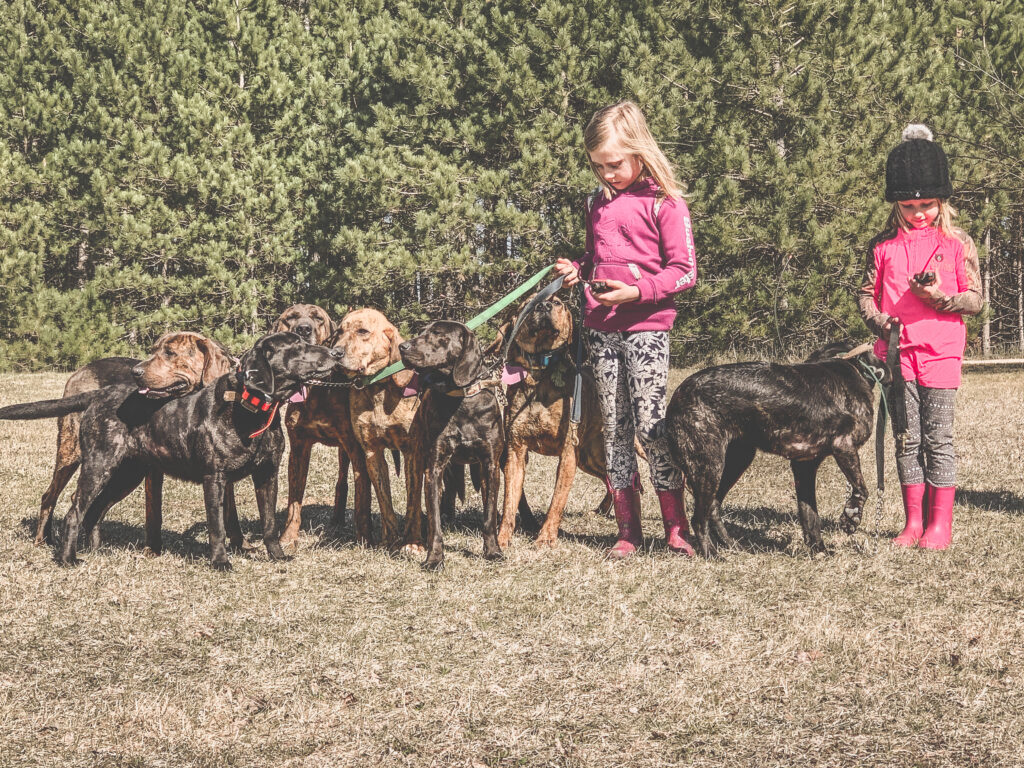 May 2020 | Courtney Yuma | 2 girls and their pack of hounds | Getting the hounds ready