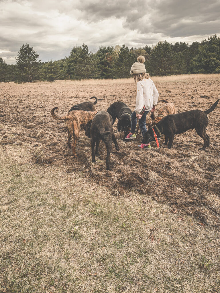 September 2021   Courtney Yuma   On the trail   Took the hounds for a walk and they found something they all had to check out